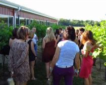 Vineyard and Winery Tours