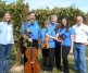 Violins and the Vineyard